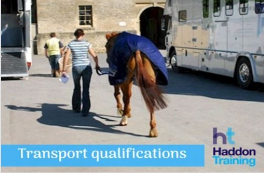 Haddon Training Qualifications In Horse Transportation
